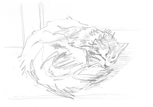 уснувший кот