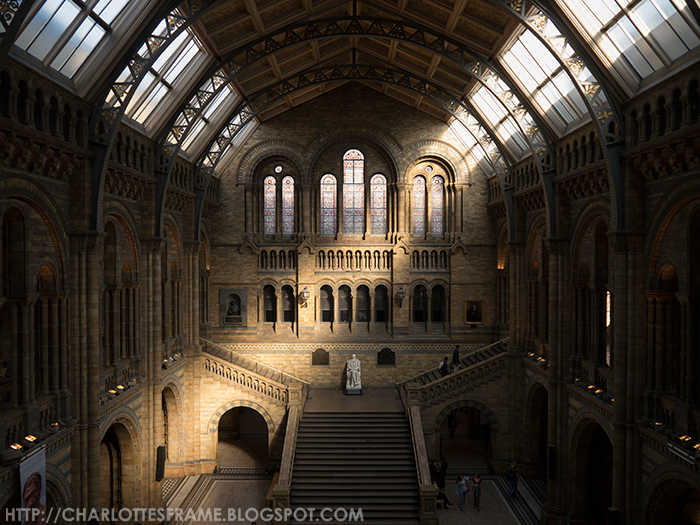 natural history museum inside