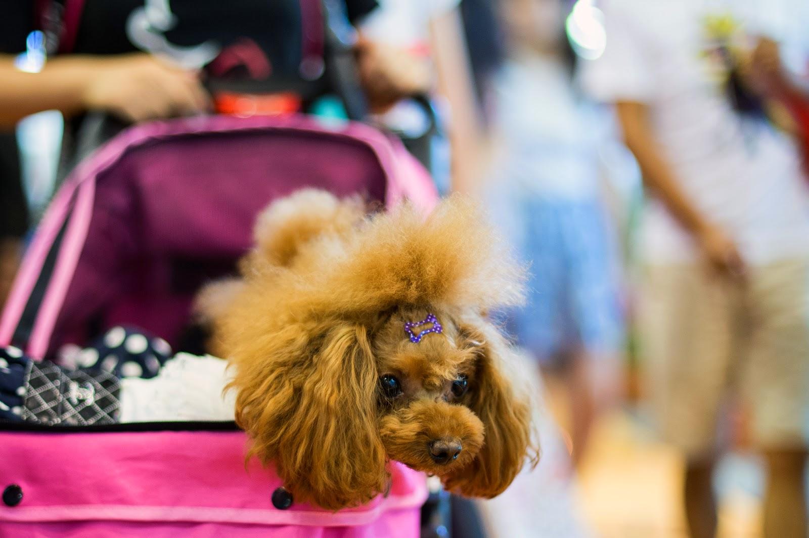 Asia Pet Fair 2014 in Shanghai HD Pictures