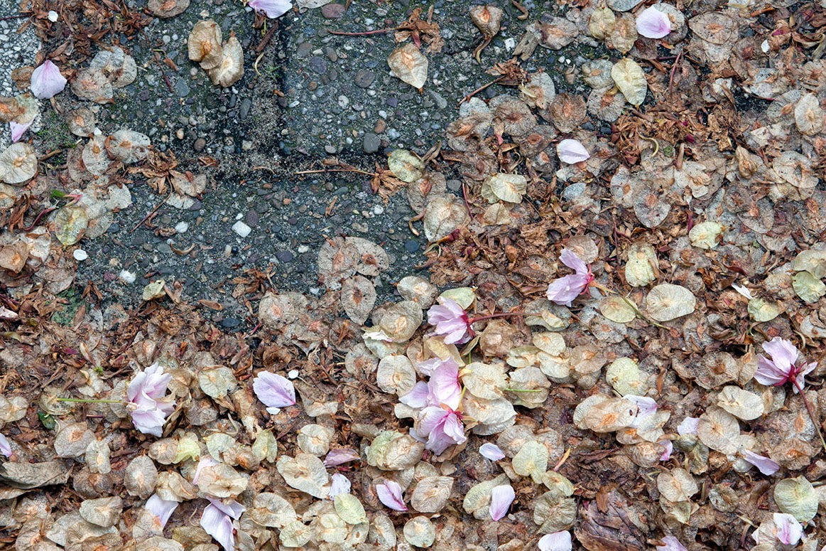 petals and seeds in the gutter