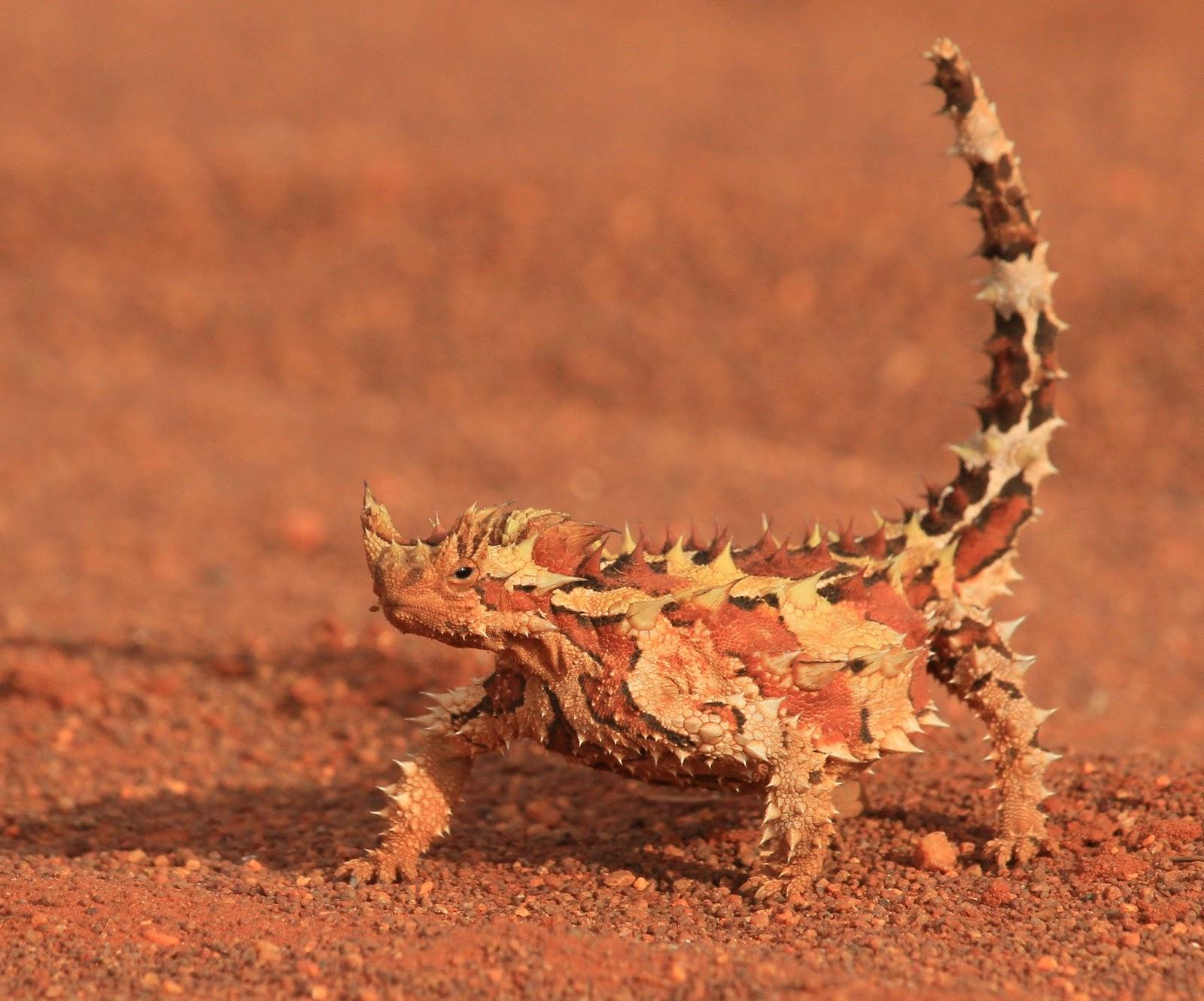 nutrition for bearded dragon lizards