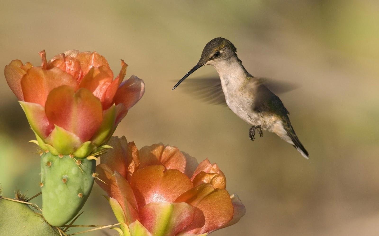 http://1.bp.blogspot.com/-cT1QeP35xIM/T0EyU_vRr8I/AAAAAAAAAx4/fURydXtLm7M/s1600/Bird+near+to+flower+HD+wallpaper.jpg