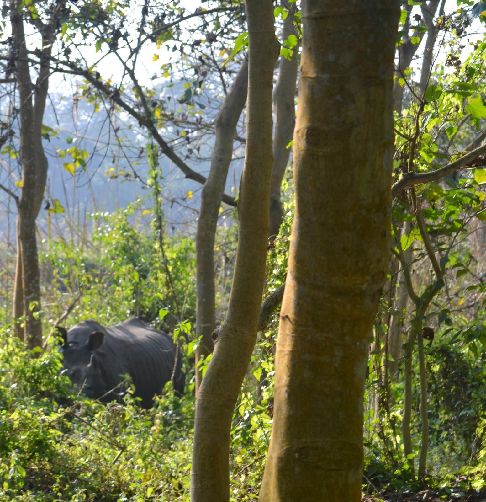 rhino chitwan nepal