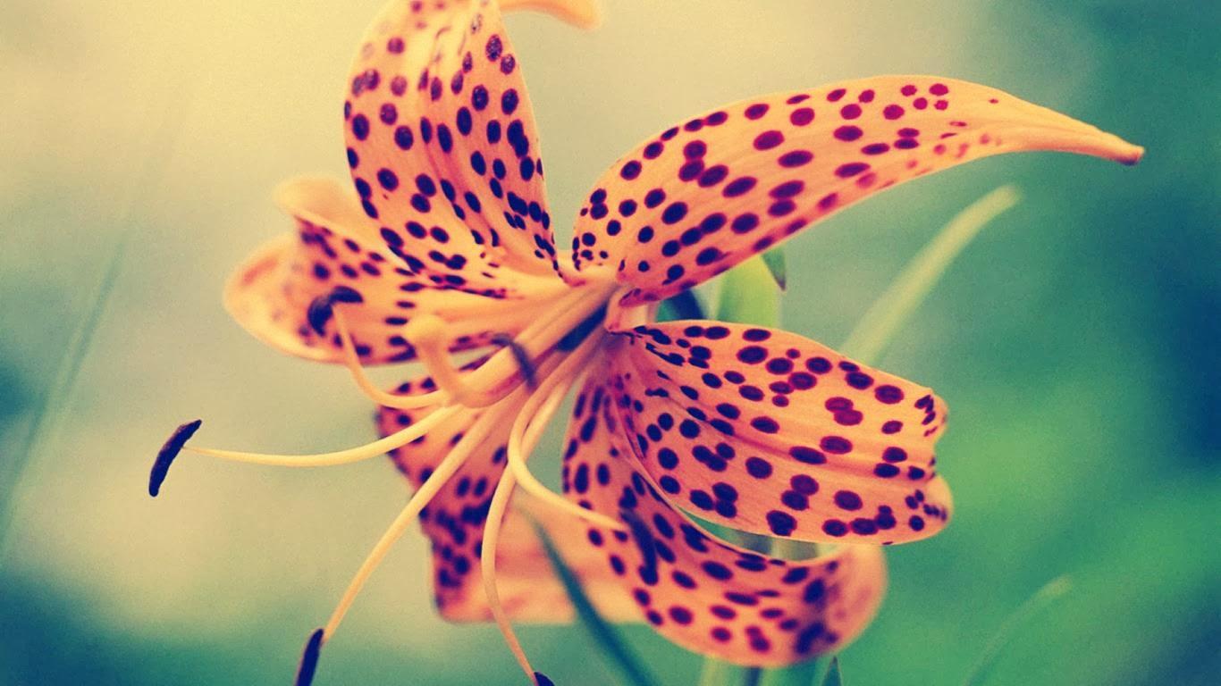 Con cada palabra hazme renacer como flor en primavera