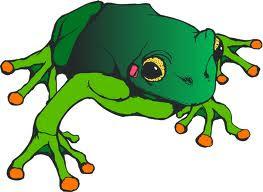 Caroline-Bull Frog