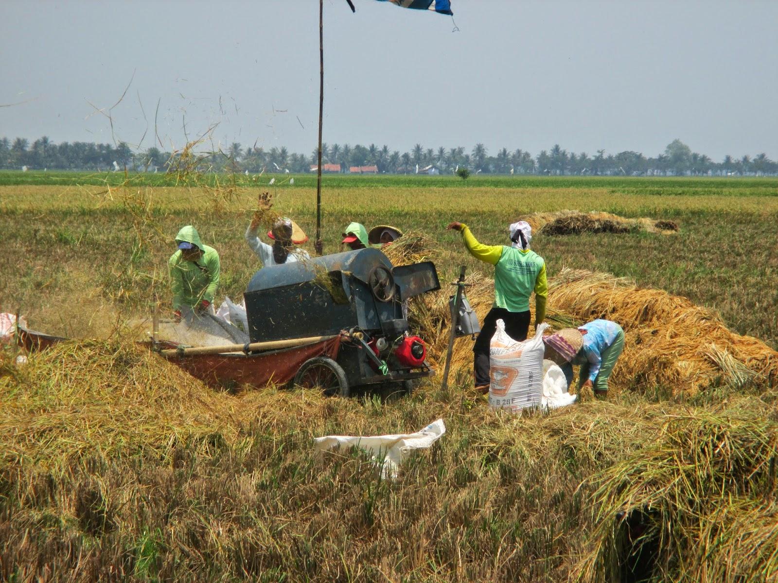 Sektor Pertanian Perlu Diversifikasi Dan Refungsionalisasi Potret