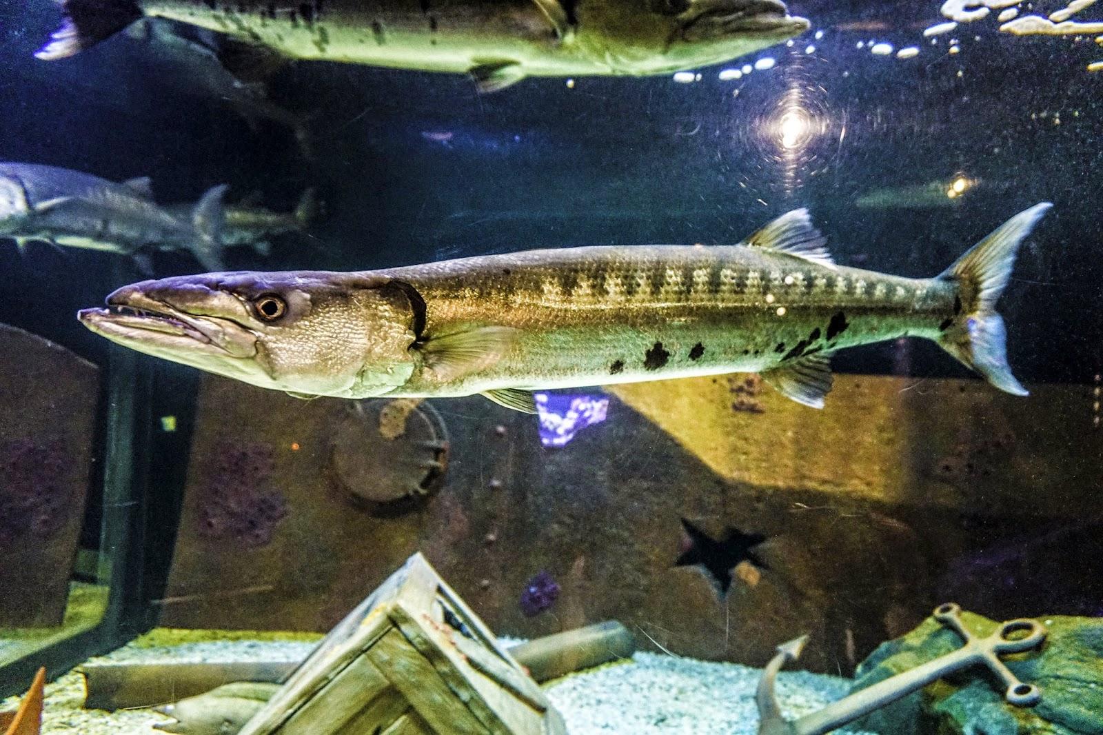 Mystic-Aquarium-Mystic-Connecticut-Travel-the-east