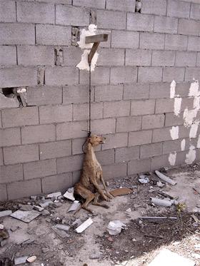 El Maltrato Al Animal :S