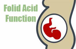 manfaat dan fungsi asam folat