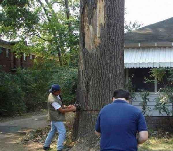 Menebang Pohon