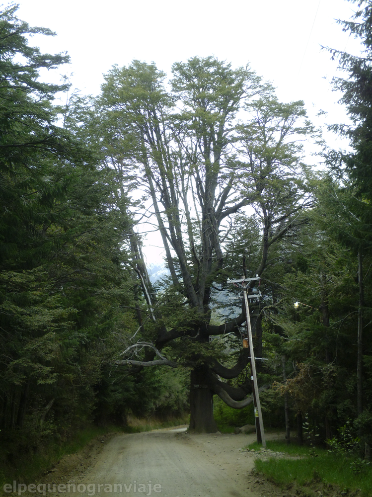 Bariloche, colonia suiza, cohiue