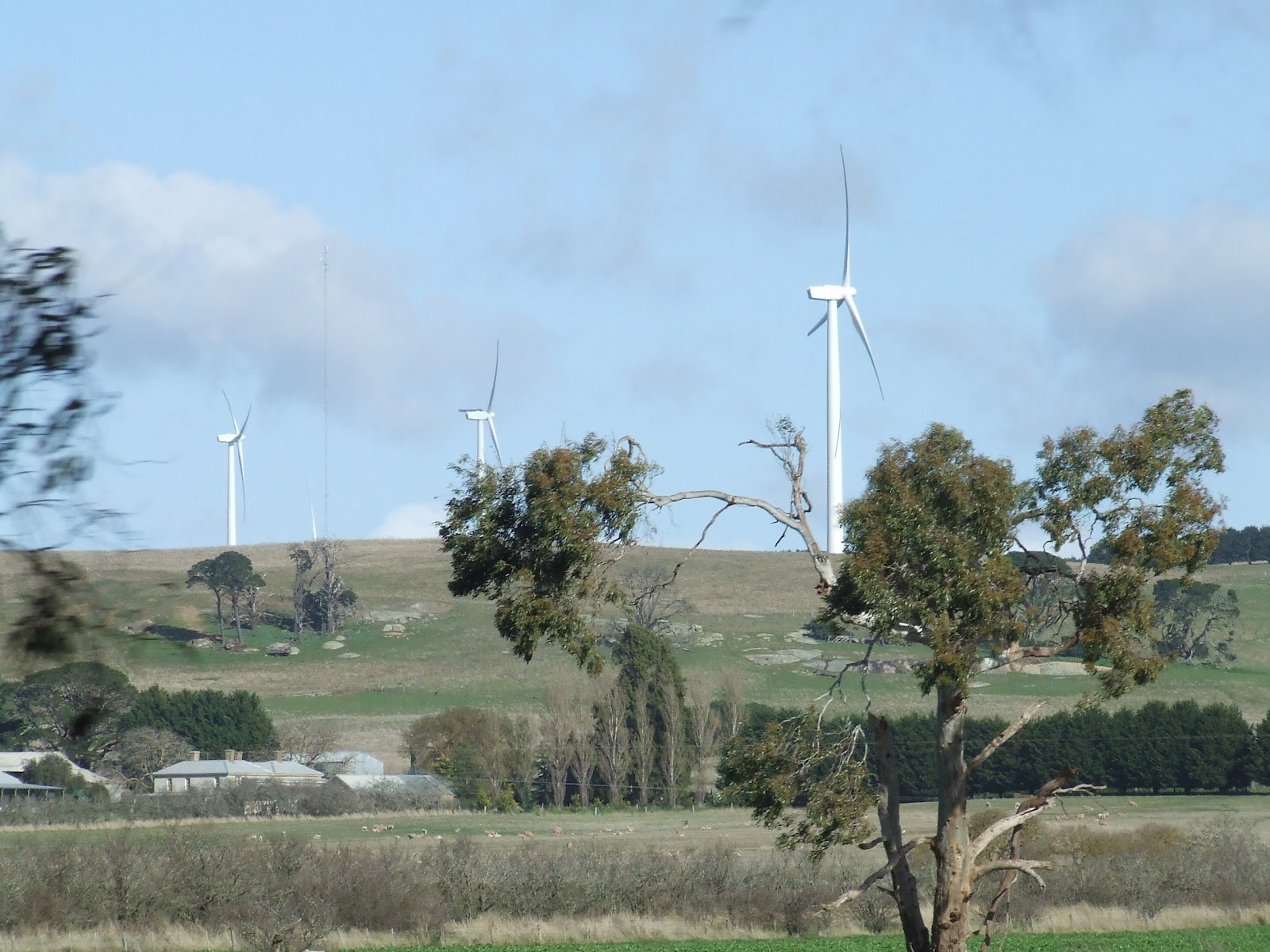 waubra wind farm the greening of gavin