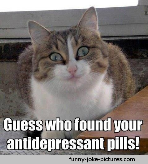 who found your Antidepressant Pills Cat Meme Picture Image Photo JokeFunniest Cat Memes