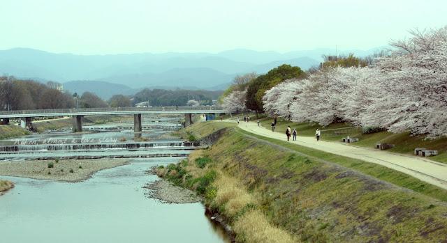 Spring Kamogawa