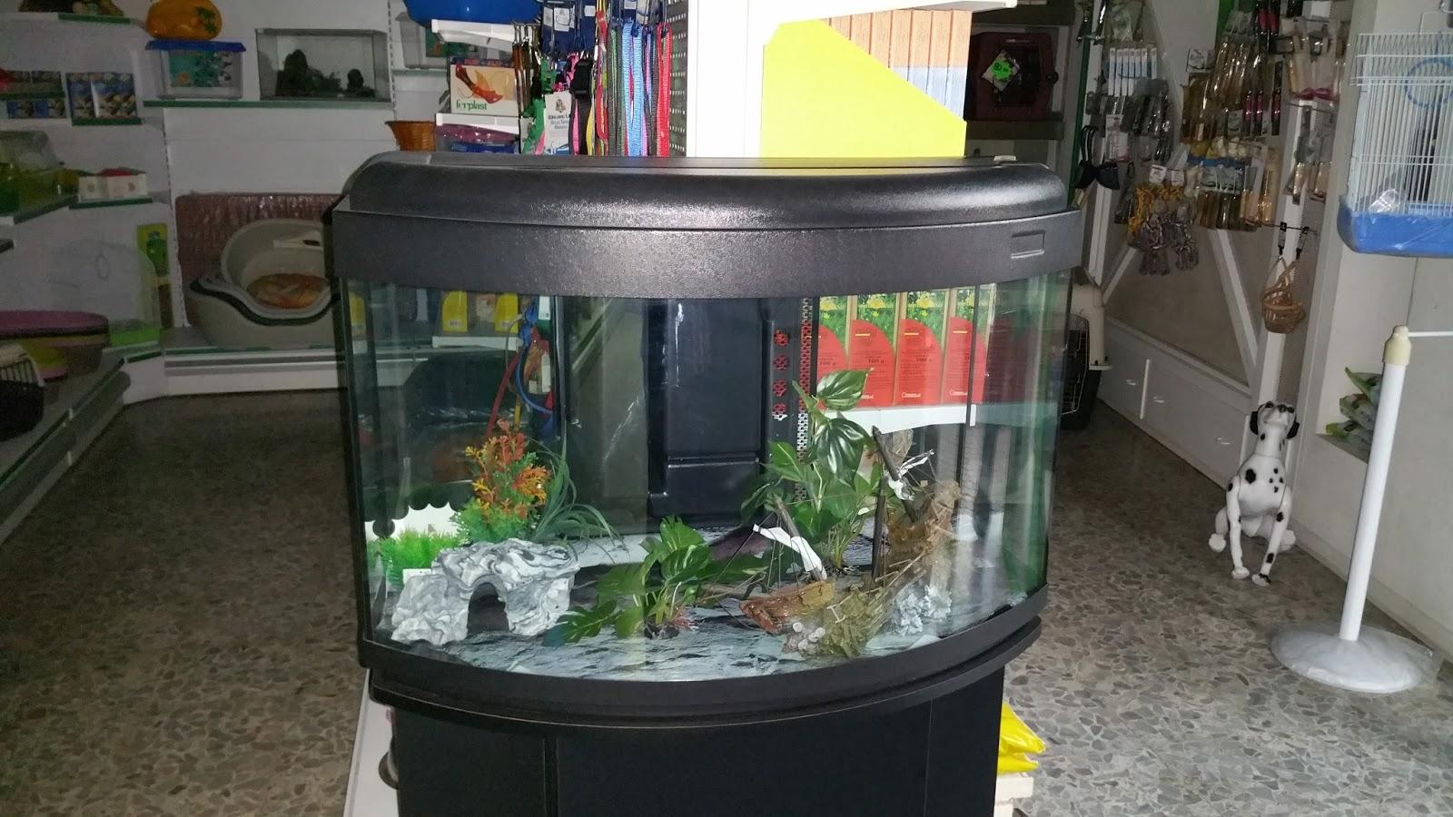 Piranha acquario 60 litri casamia idea di immagine for Acquario 250 litri