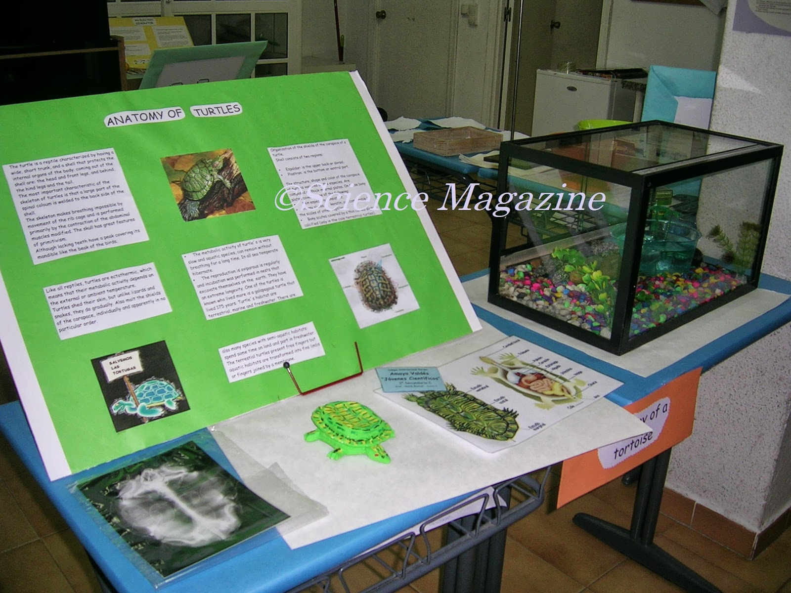 science magazine science fair project turtles by a a vald eacute s stand ready for the science fair