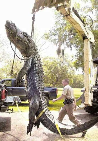 Largest Crocodile ???? Being in Florida I hope I don't run into this