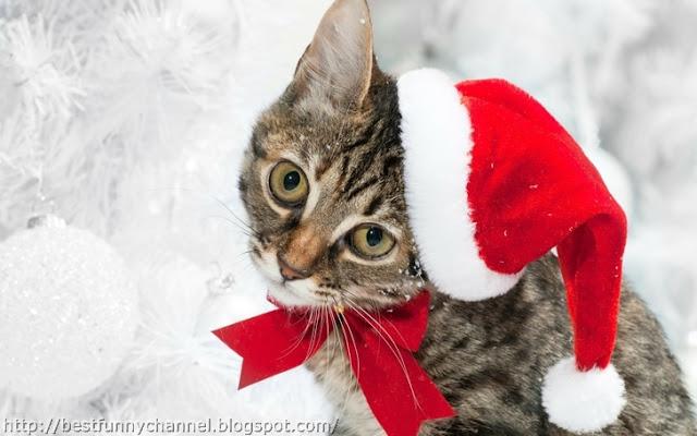 Cat Santa.