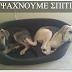 Δύο χαριτωμένα σκυλάκια ψάχνουν σπίτι...