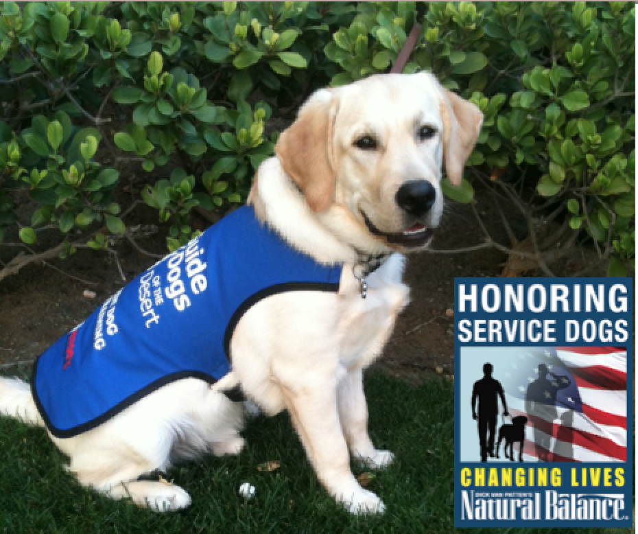 How To Train A Service Dog For Balance