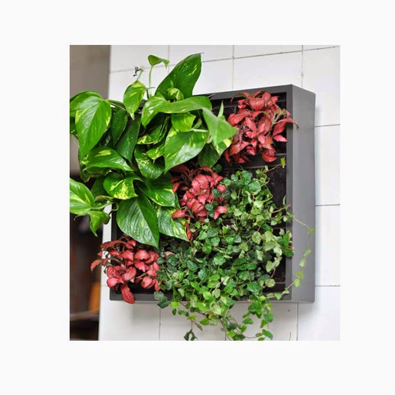 Mini jard n vertical decora tu pared con plantas for Plantas verticales interior