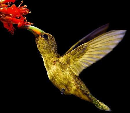 Tingkah Indah Burung Di AlamSaung Bird | Burung Kicauan
