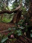 基礎農林2020演習林実習おまけ