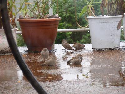 Happy sparrows 5