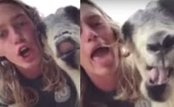 Guy takes daily selfies with his goat