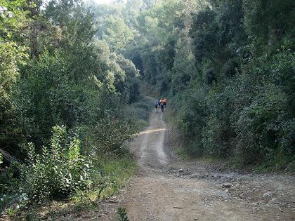 El camí passa pel Bosc de Can Balasch