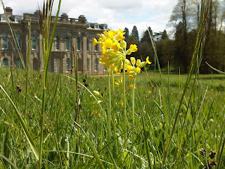Cowslip-west+lawn-Compton+Verney-Gary+Webb-Wild+Flowers