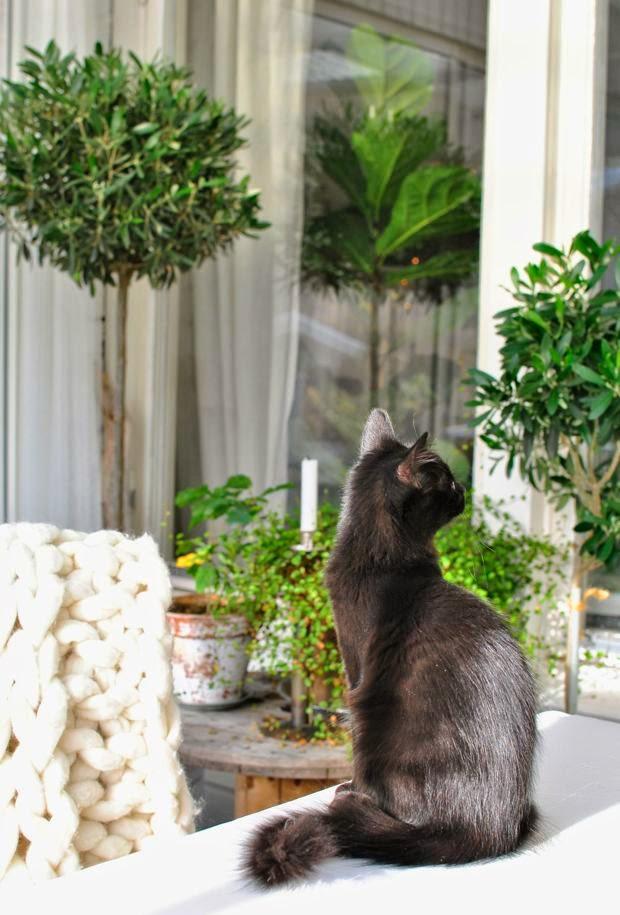 uterum altan kattunge