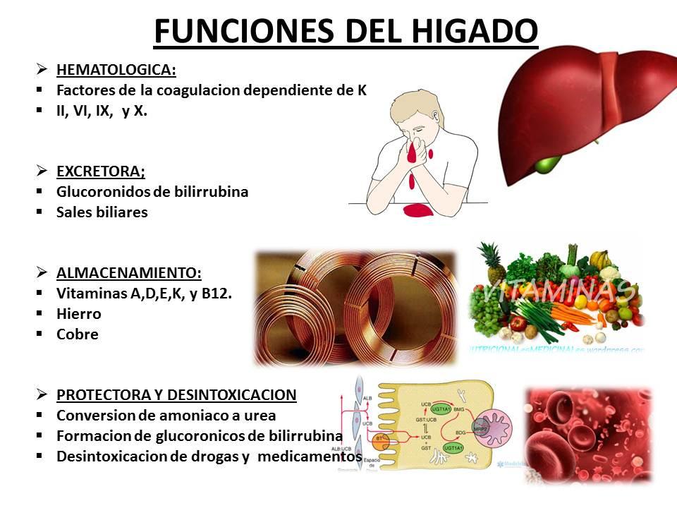 Fisiología de Clarisa Angulo: Ira Fox : \