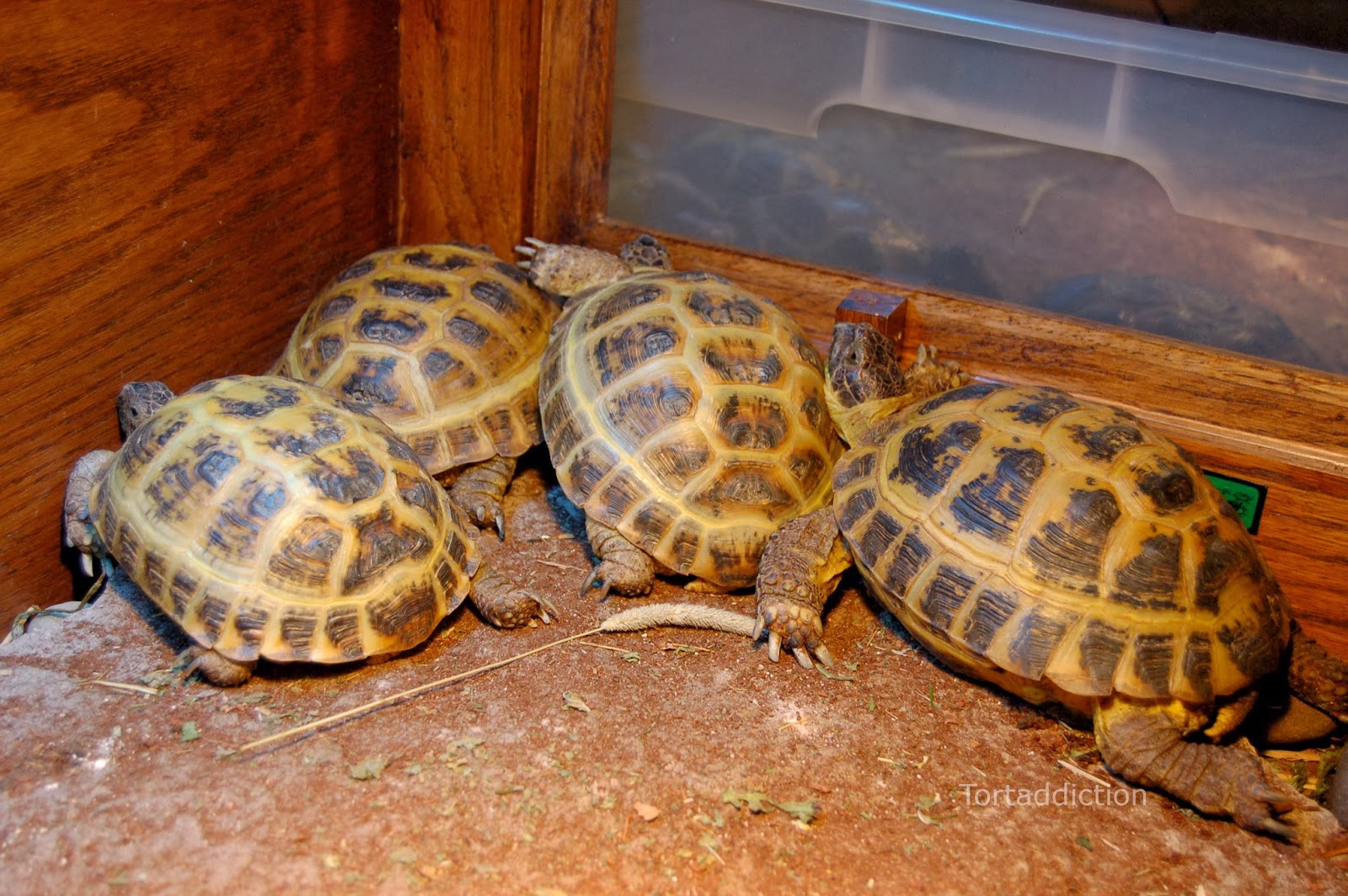Room Temperature For Baby Tortoise