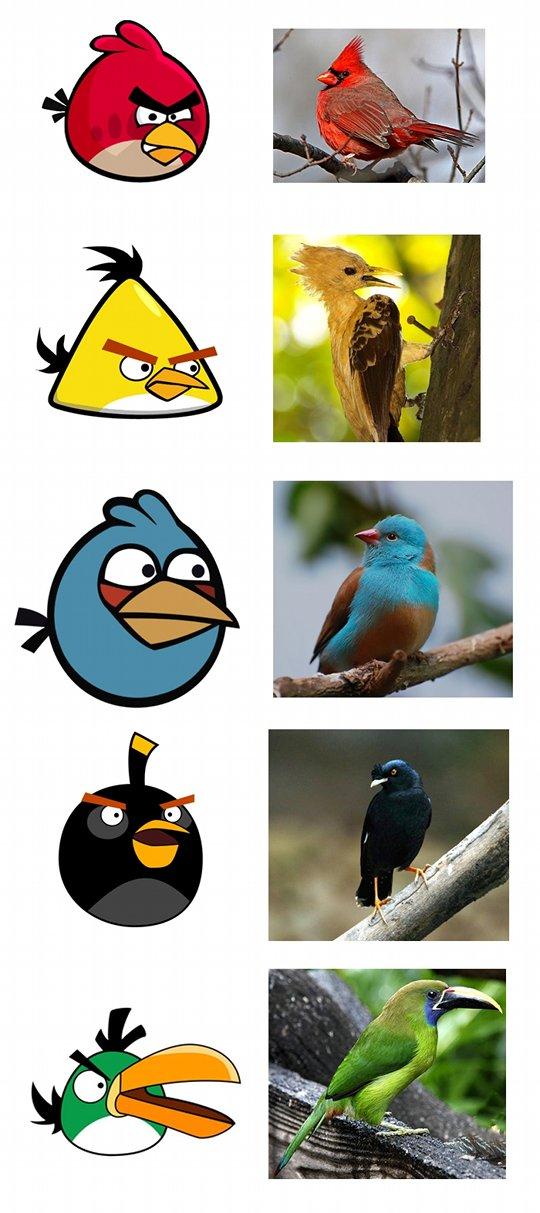 Burung-burung Angry Birds di alam