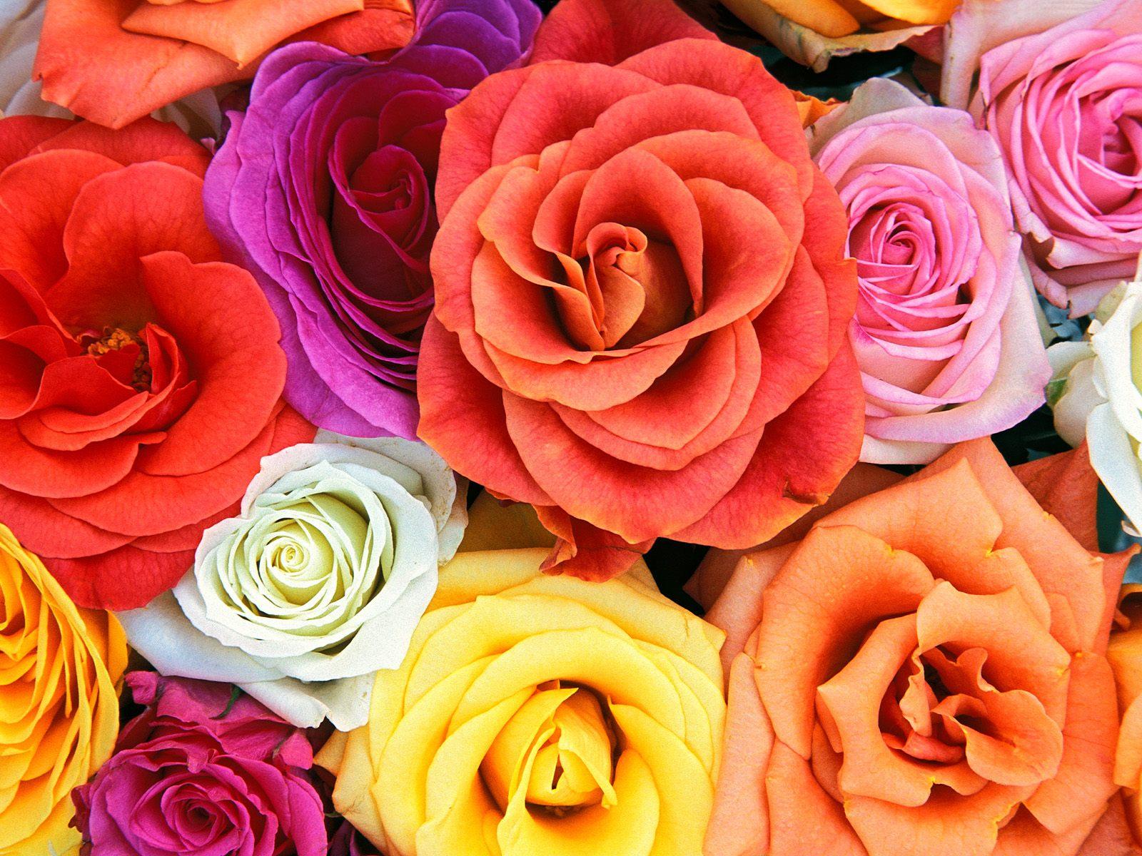 http://1.bp.blogspot.com/-cXpV2XAAuAk/UWEm7Tdh7VI/AAAAAAAAAz4/DI0dcCkTp-U/s1600/Roses-Flowers-Wallpapers.jpg