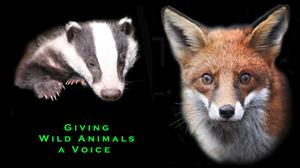 BRIAN MAY'S CAMPAIGN AGAINST ANIMAL CRUELTY