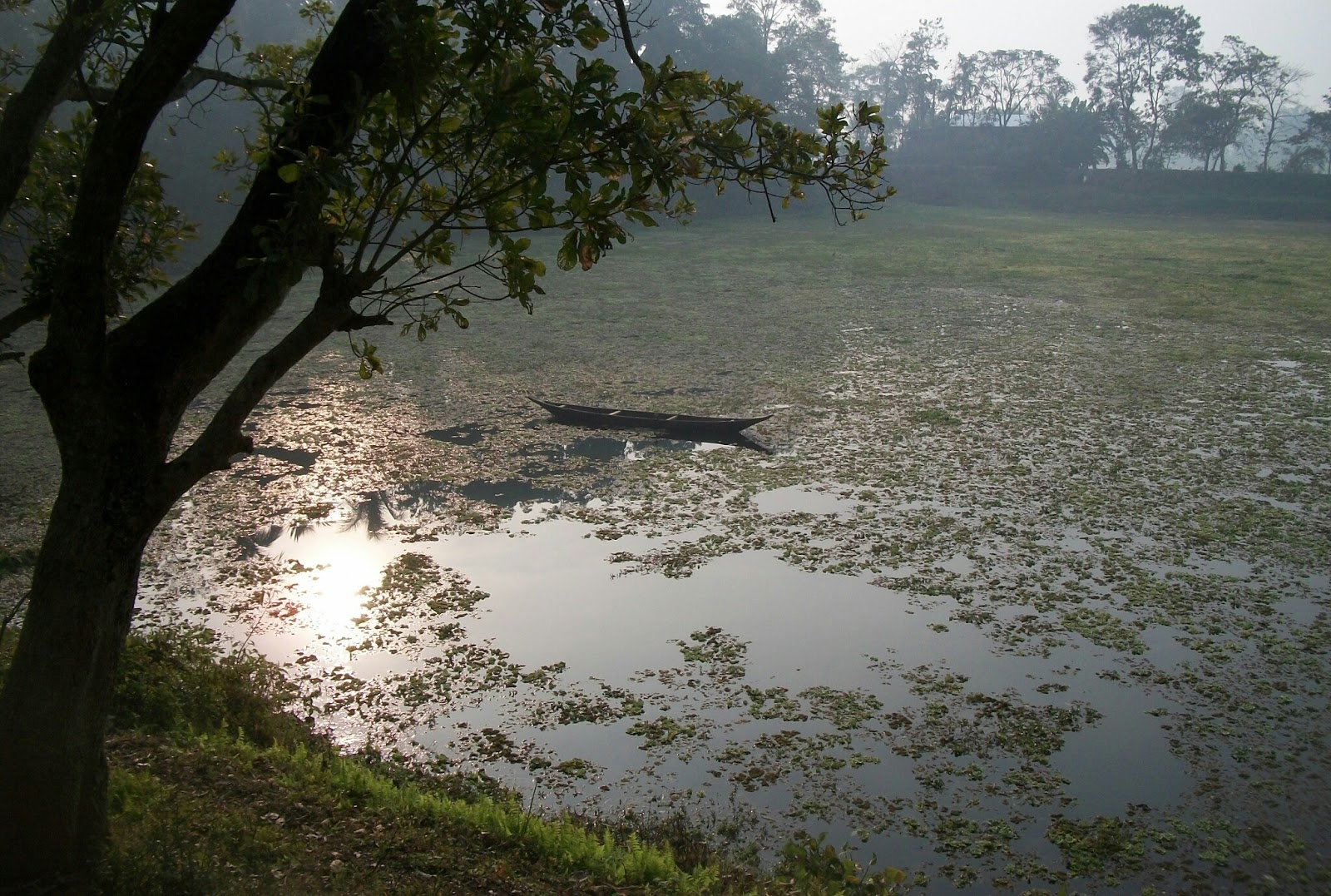 Image of a wetland. There are hundreds of wetlands scattered all over Majuli, which not only supports variety of aquatic animals and plants, but attract a large number of water birds, resident and migratory alike.