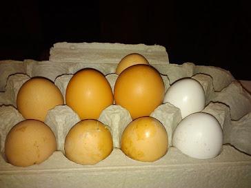 More eggs...