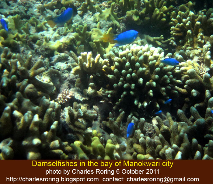 Raja Ampat Snorkeling Freediving Hiking And Birding: Coral