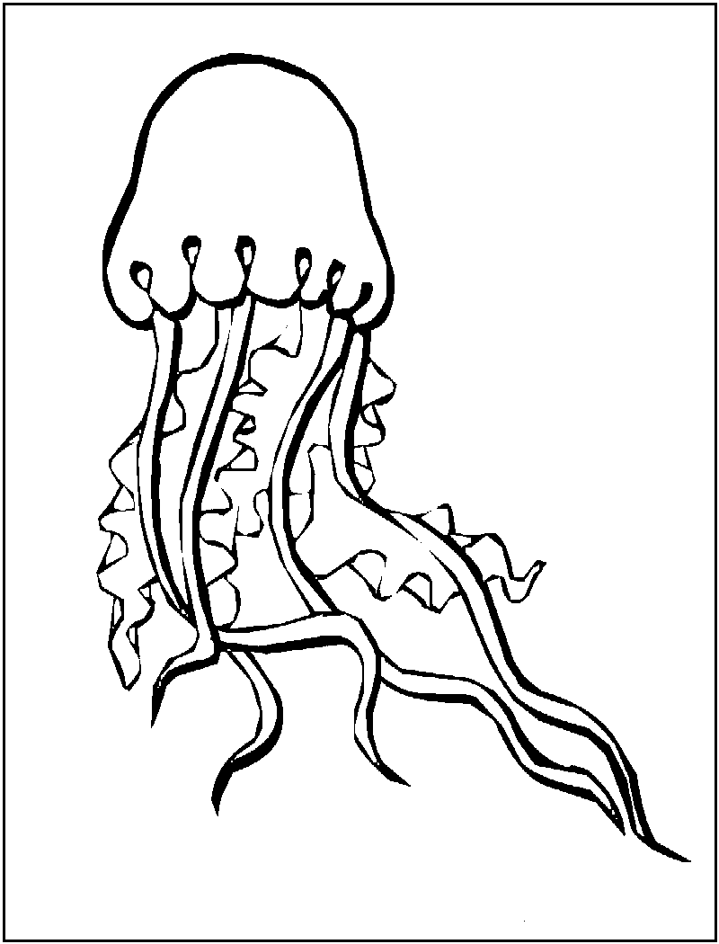 jelly fish coloring page sea animal jellyfish coloring sheet