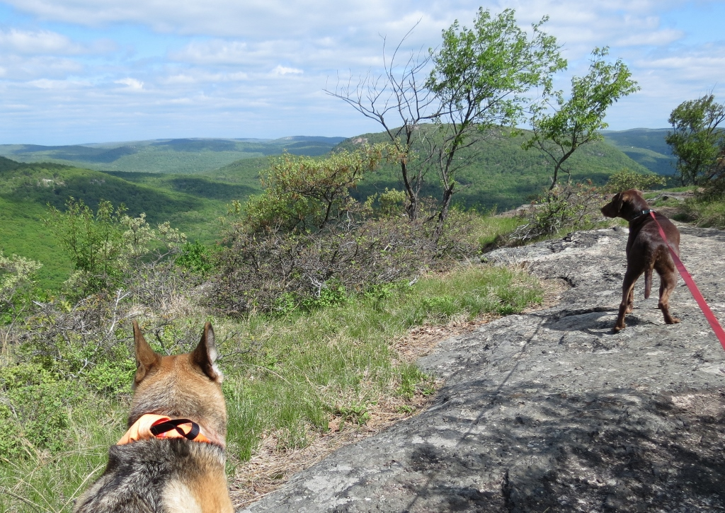 Gone Hikin': Harriman State Park, NY - Dunderberg Mountain