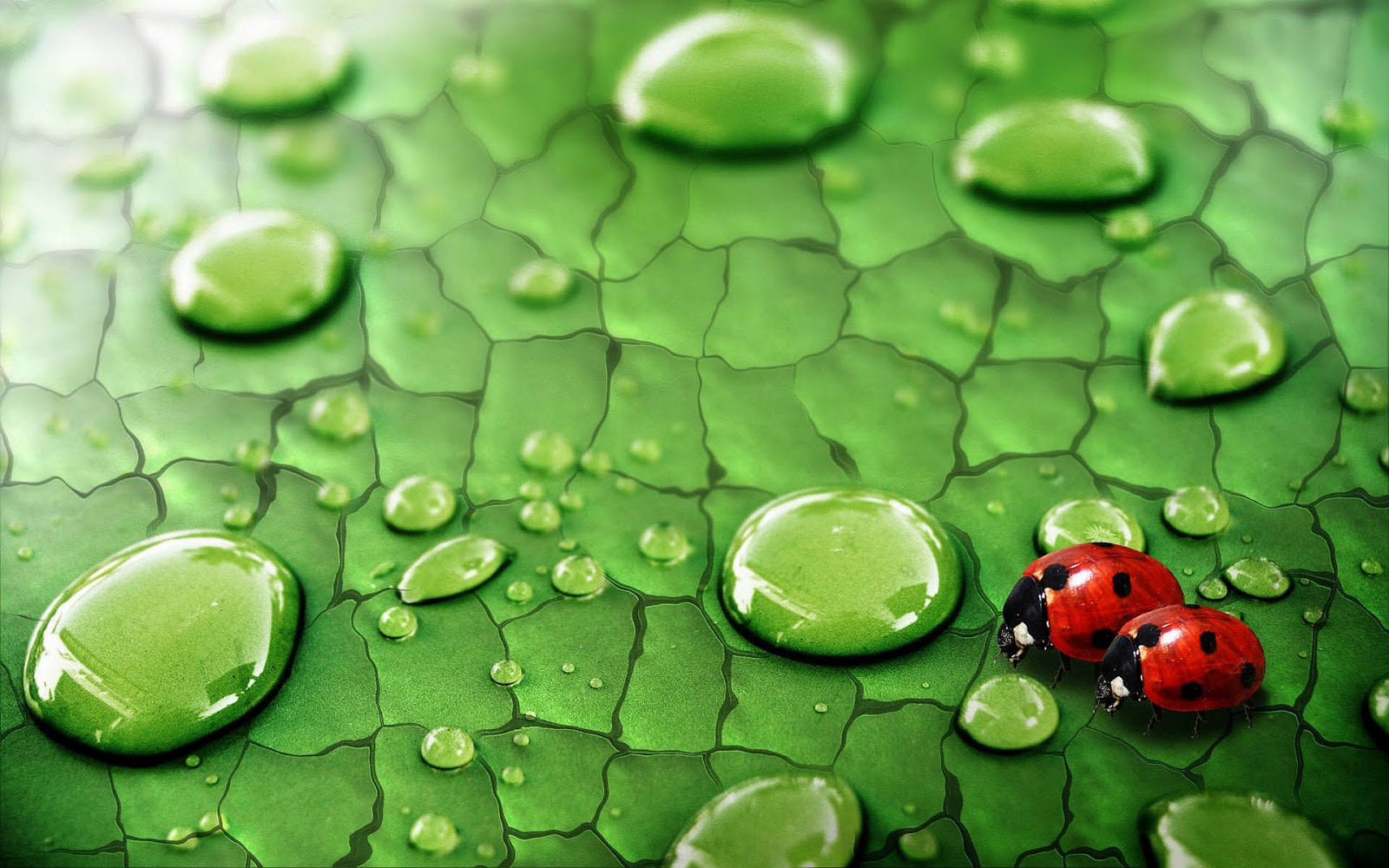 1bpblogspot CZCmVxKo548 UDkSNgaUIYI Wallpaper With Two Ladybugs Walking On A Leaf Water Drops