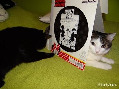 koty i karton, kotyszki
