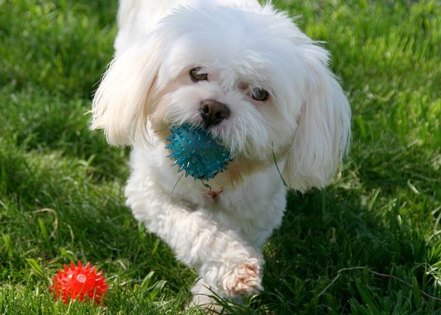 Kumpulan Gambar Anjing Lucu Dan Menggemaskan