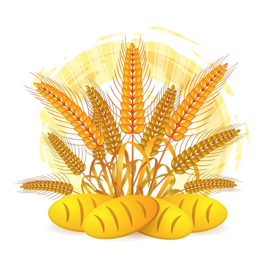 小麦の収穫とパン Wheat vector picture イラスト素材
