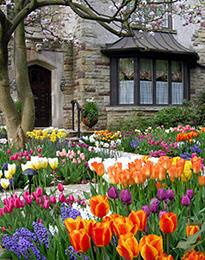 Mrs petals flower bulb care and tips for Spring bulb garden designs