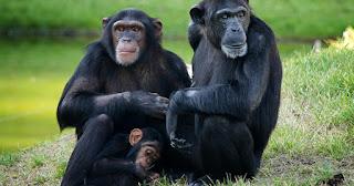 Gli investimenti in borsa e le scimmie