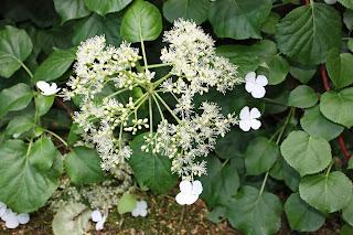 Boise Daily Photo Garden Shot June 2012