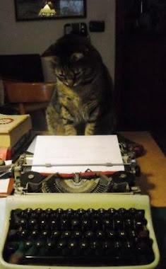 Il Gatto che Legge e Scrive
